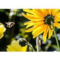 obraz żółty kwiat i pszczoła P500