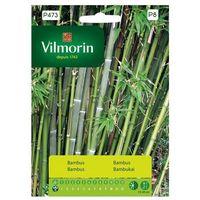 Bambus mrozoodporny