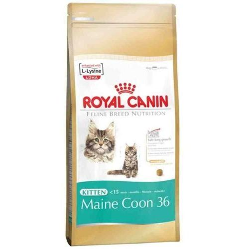 kitten maine coon 400g marki Royal canin