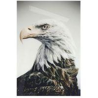 plakat eagle na plexibond asc0014 marki Hk living