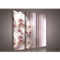 Obraz Białe Storczyki na fioletowym tle PS844S6, PS844S6