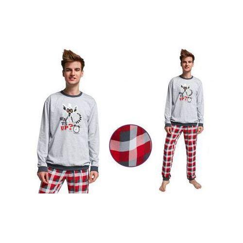 Piżama młodzieżowa lemur: szary marki Cornette