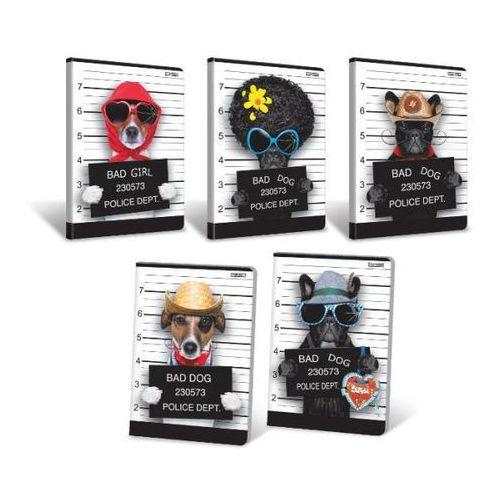 Zeszyt A5 w kratkę 16 kartek Bad Dog 20 sztuk mix (5904017033653)