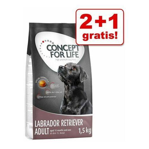 2+1 gratis! karma sucha dla psa, 3 x 1,5 kg - labrador retriever adult marki Concept for life