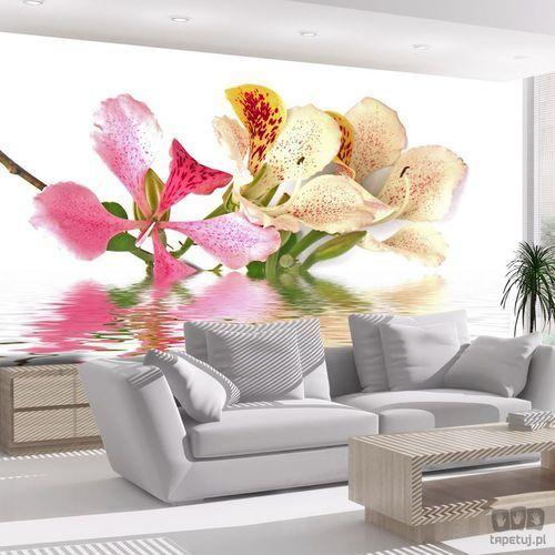 Fototapeta Kwiaty tropikalne - drzewo storczykowe (bauhinia) 100406-53