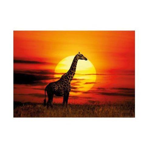 HEYE 1000 EL. Żyrafa z zachodem słońca