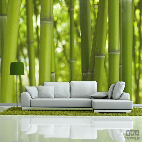 Fototapeta Bambus - zielony 100403-131, 100403-131