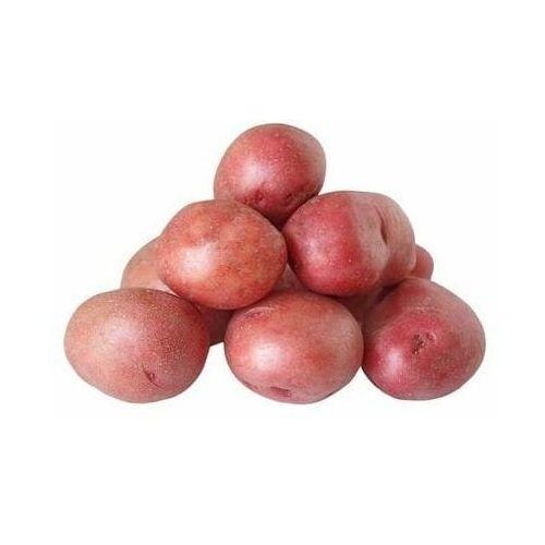 Świeże dystrybutor: bio planet s.a., wilkowa wieś 7, 05-084 leszno k. Opakowanie zbiorcze (kg) - ziemniaki czerwone świeże bio (polska) (około 10 kg) (5902448163093)