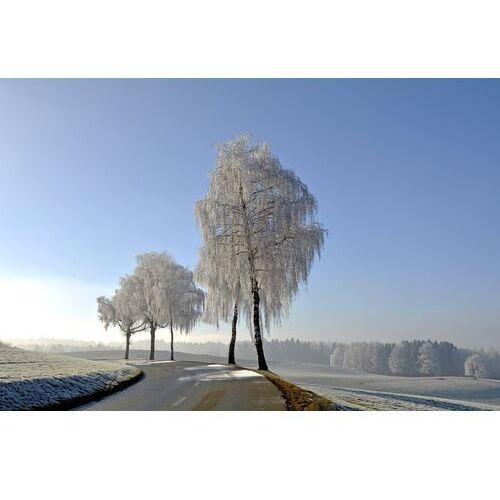 Fototapeta na ścianę przydrożny zakręt zimą FP 5967