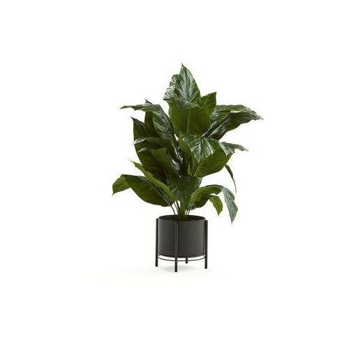 Skrzydłokwiat, 1050 mm, czarna stalowa donica marki Aj produkty