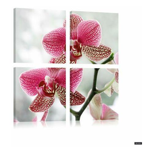 obraz - orquidiana (różowo-białe kwiaty) 80x80 cm marki Selsey