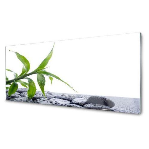 Obraz Akrylowy Liść Natura Kamienie Roślina