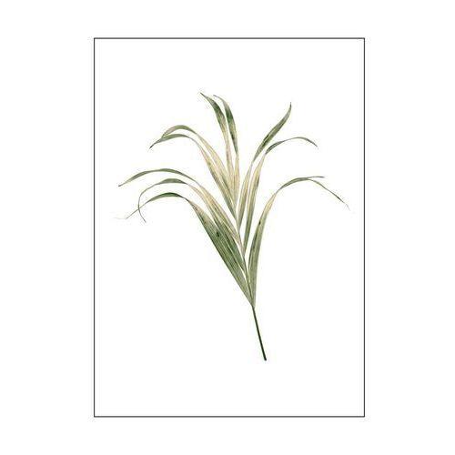 Art canvas Kanwa liscie palmy 50 x 70 cm (5901844231412)