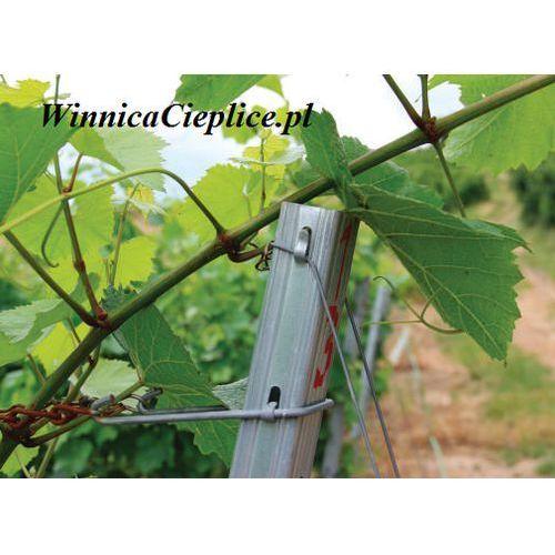 Słupek vino frankovka 2700x60x40/2 marki Winnica cieplice