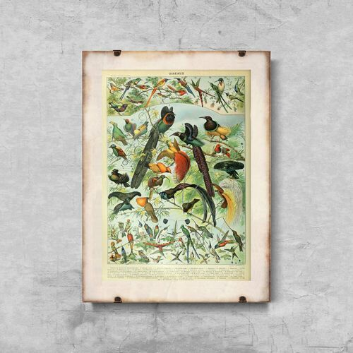 Vintageposteria.pl Plakat vintage plakat vintage ptaki adolphe millot