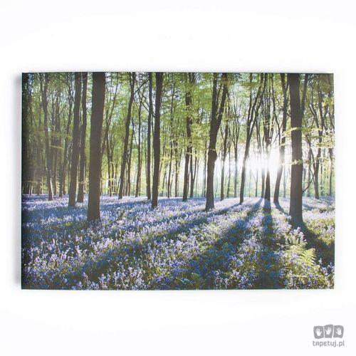 Obraz las i hiacyntowiec zwyczajny 40-247 marki Graham&brown