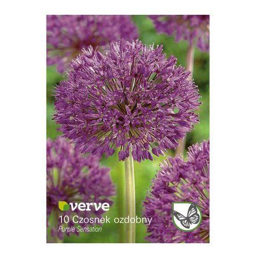 Cebule czosnek purple sensation 10 szt. marki Verve