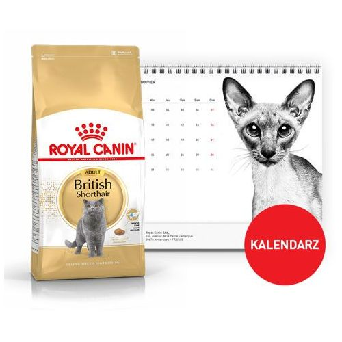 british shorthair 2kg + kalendarz 2018 marki Royal canin