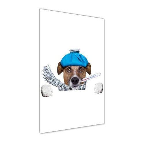 Foto obraz szkło hartowane Chory pies