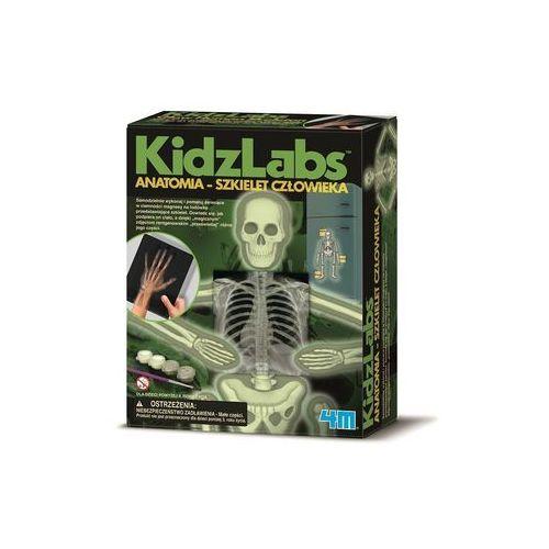 4m Anatomia szkielet człowieka