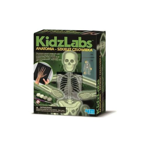 Anatomia szkielet człowieka (4893156033758)