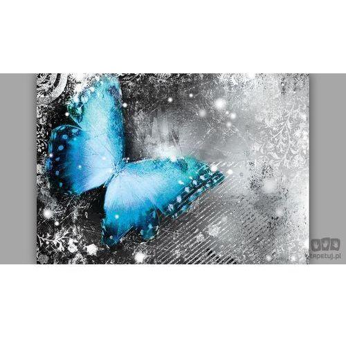 Consalnet Fototapeta niebieski motyl na popielatym tle 574