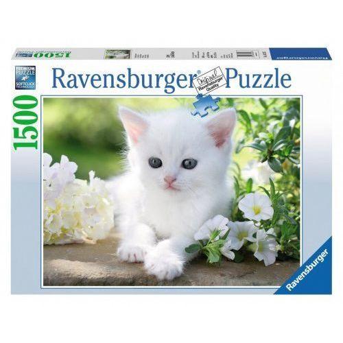 Ravensburger Puzzle 1500 elementów - biały kociak - darmowa dostawa od 199 zł!!! (4005556162437)