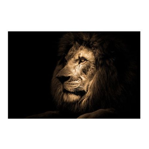 Obraz Glasspik Lion 70 x 100 cm (5902841501850)
