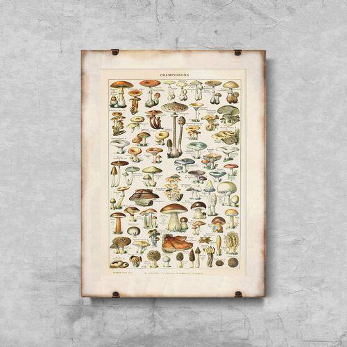 Plakat do pokoju Plakat do pokoju Grzyby 1909 Adolphe Millot