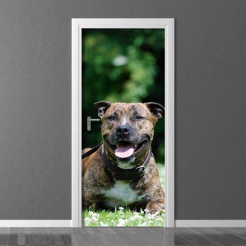 Fototapeta na drzwi amerykański staffordshire terier p3 marki Wally - piękno dekoracji