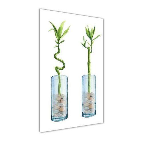 Foto obraz na szkle Bambus w doniczce