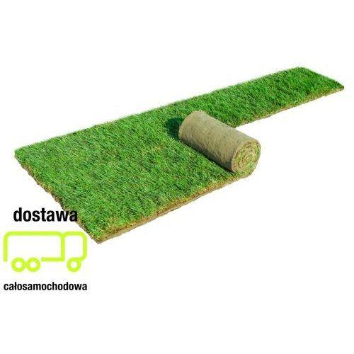 Najlepsze trawy z iławy Trawa z rolki 40 m2
