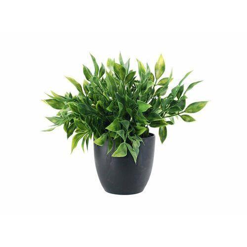 Roślina w doniczce marki Black red white