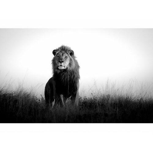 Designerski duży obraz ze szkła akrylowego LION - 120x80x0.4 cm - czarny i biały