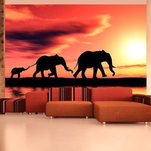 Fototapeta - słonie: rodzina