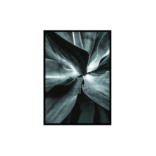 Obraz SUCCULENT 50 x 70 cm (5902841515086)