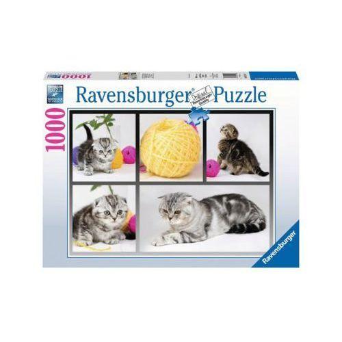 Ravensburger 1000 elementów brytyjskie koty krótkowłose (4005556195459)