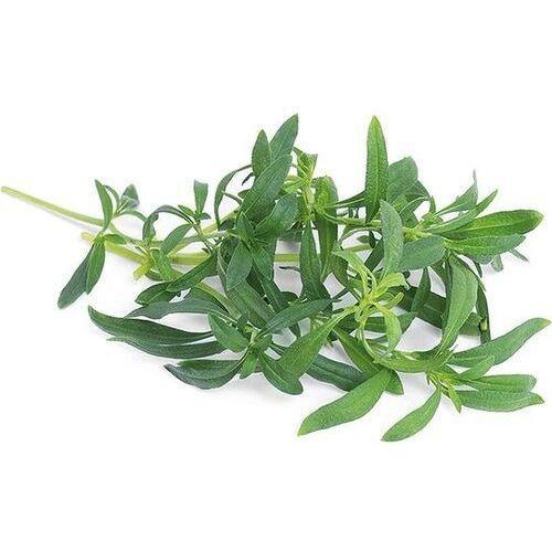 - podstawowe zioła - wkład nasienny - cząber górski (do doniczek autonomicznych) marki Véritable