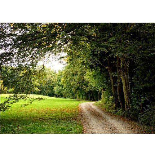 obraz droga przy lesie P453