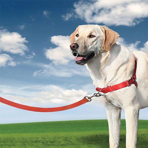 Premier - easy walk Szelki easywalk dla większych psów - mocna obroża