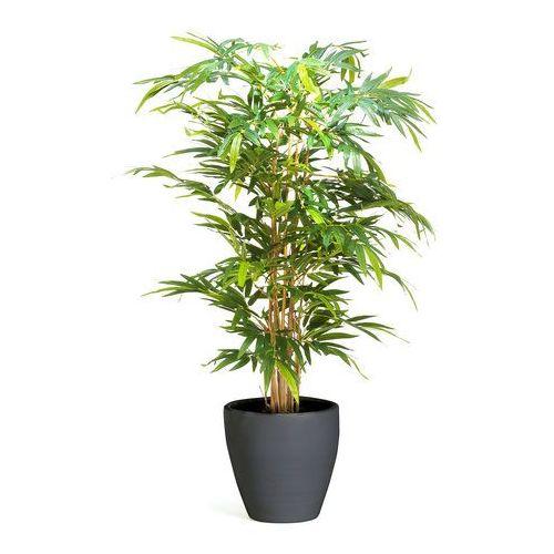 Aj produkty Drzewko bambusowe, 1500 mm, dostarczany z czarną donicą