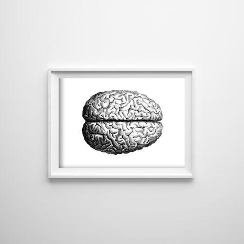 Plakat do pokoju plakat do pokoju anatomiczny mózg marki Vintageposteria.pl