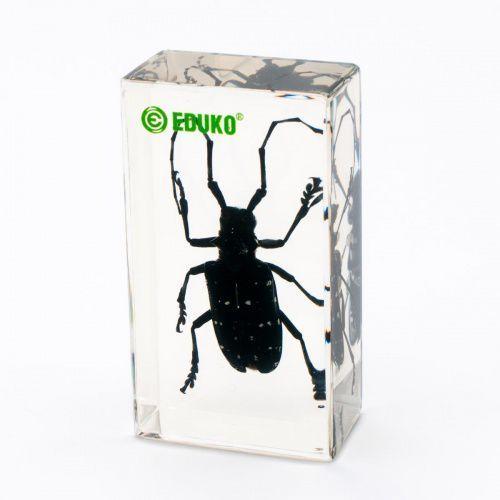 Kózka chrząszcz - preparat zatopiony w pleksi