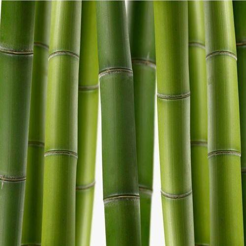 Wally - piękno dekoracji Wyprzedaż: fototapeta do kuchni bambus 02- 163x40cm - folia wall-art, laminat połysk
