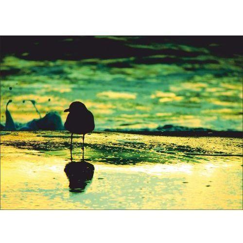 Wally - piękno dekoracji Obraz mewa na plaży p66