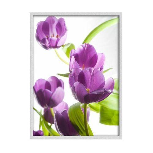 Obraz fioletowe tulipany 50 x 70 cm marki Knor