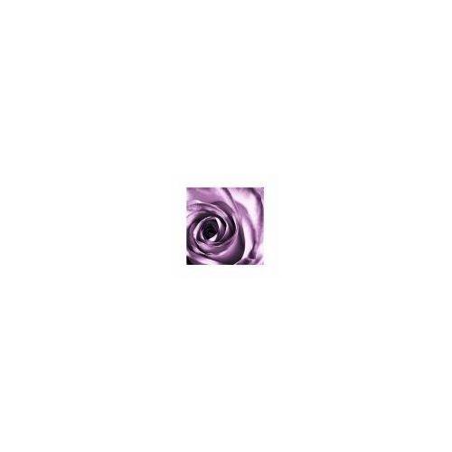 Purpurowa róża - reprodukcja (5901891534979)