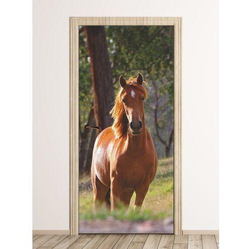 Wally - piękno dekoracji Fototapeta na drzwi ognisty ogier fp 6190