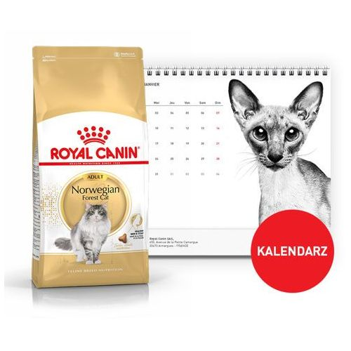 norwegian forest cat 2kg + kalendarz 2018 marki Royal canin