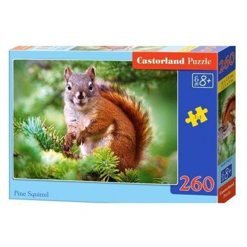 260 ELEMENTÓW Wiewiórka, kup u jednego z partnerów
